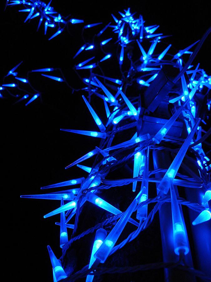 Tree Photograph - Blue Christmas Tree by Michel Mata