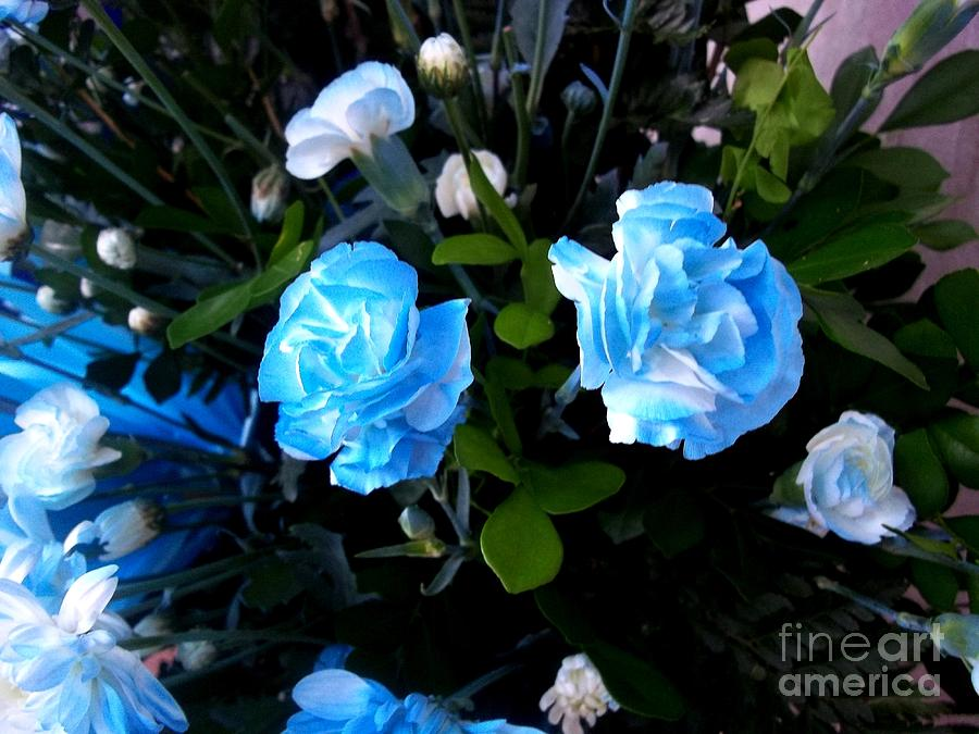 Blue Carnations Photograph by Vladimir Berrio Lemm