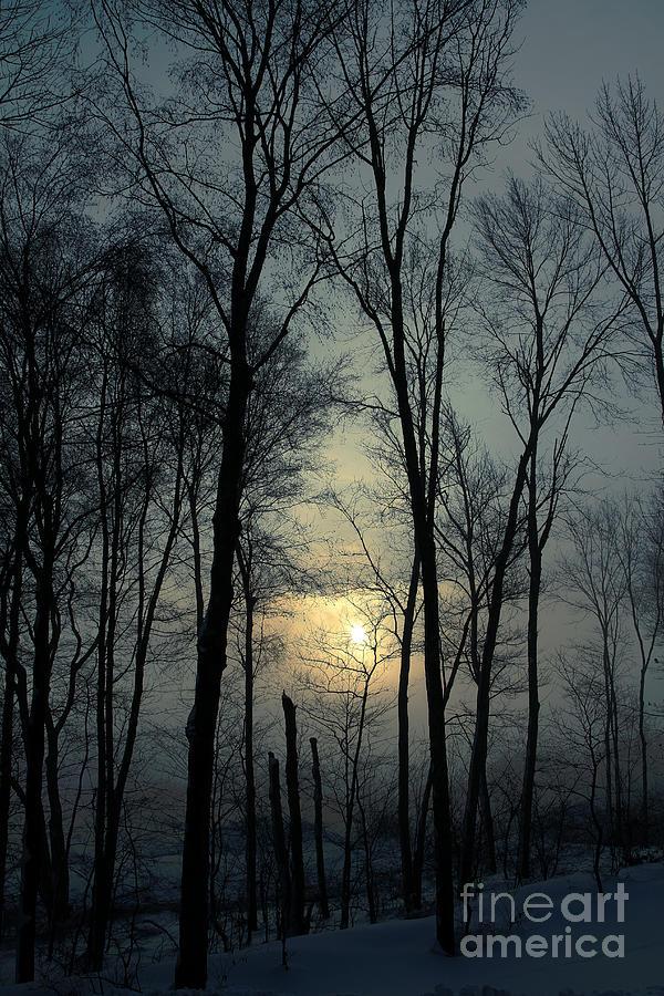Winter Photograph - Blue Daybreak by Karol Livote