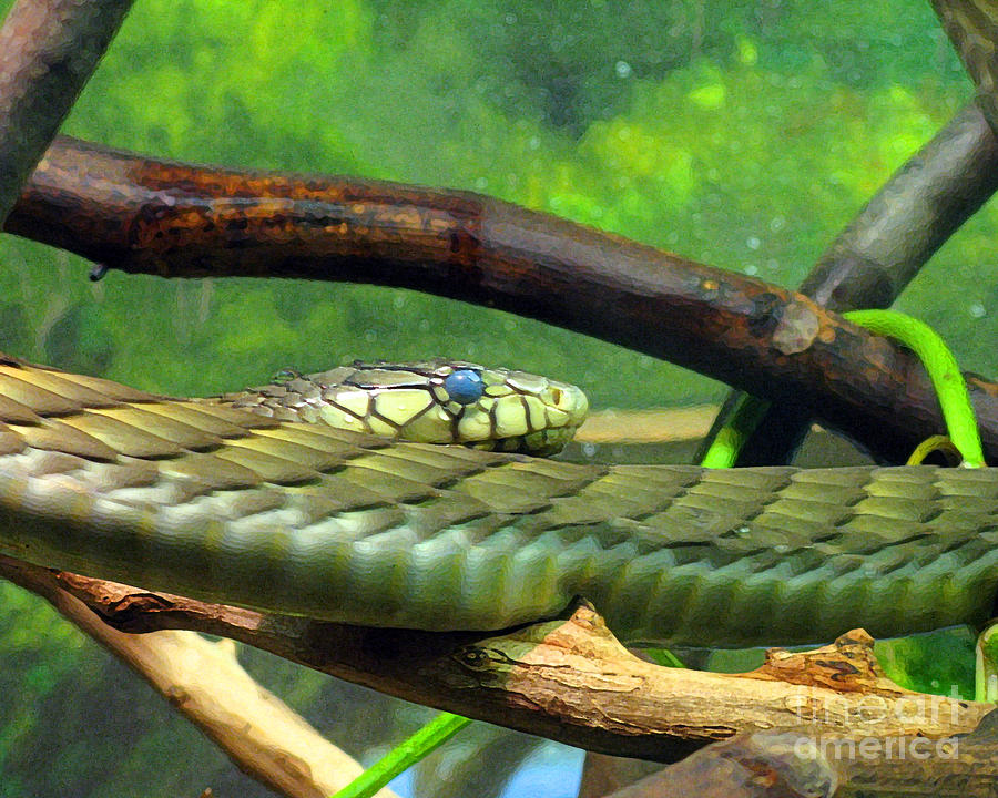 Snake Photograph - Blue Eyed Snake by Patricia Januszkiewicz