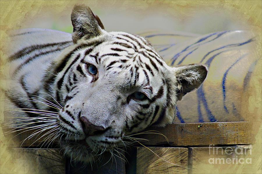 Animal Photograph - Blue Eyes by Ben Yassa