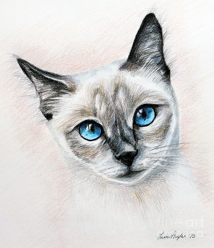 Cat Drawing - Blue Eyes by Lena Auxier
