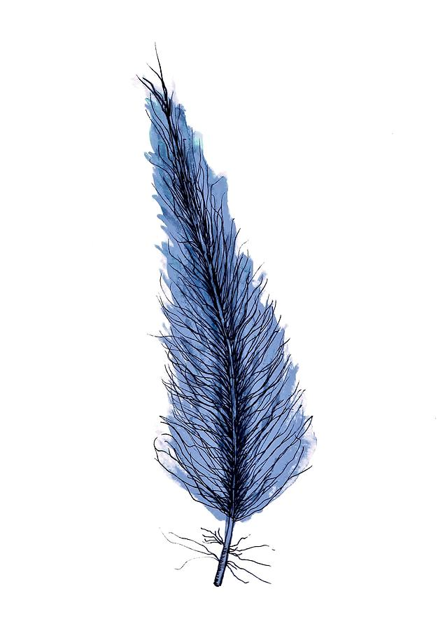 Blue Feather by Anne Clark