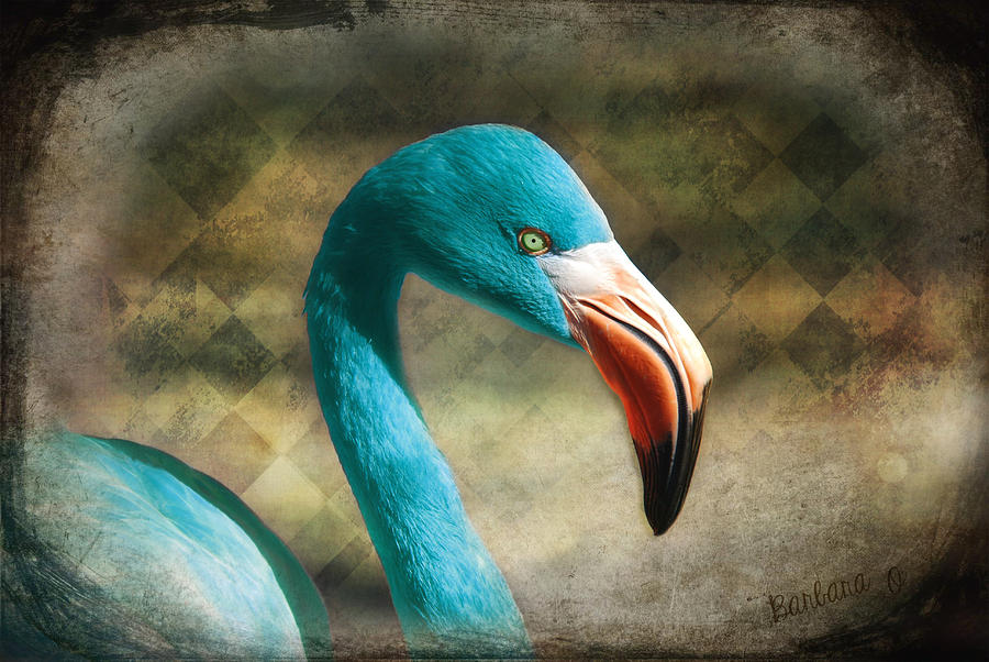 Flamingo Photograph - Blue Flamingo by Barbara Orenya