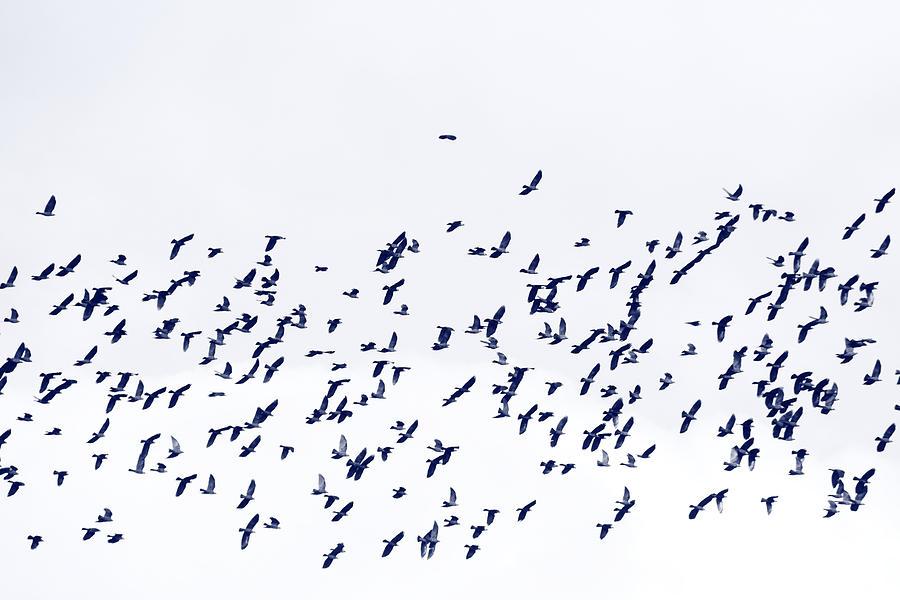 Abundance Photograph - Blue Flock Of Birds by Ulrich Kunst And Bettina Scheidulin