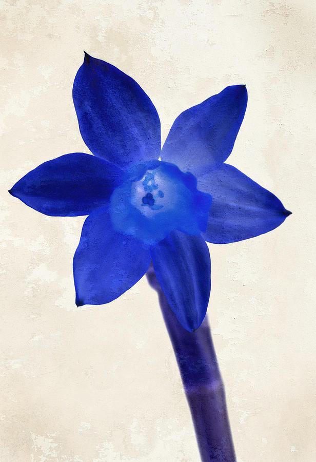 Blue Flower Beige Texture Photograph