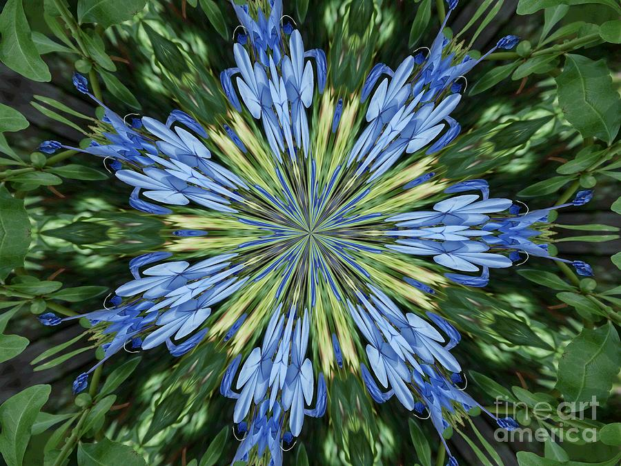 Blue Photograph - Blue Flower Star by Annette Allman