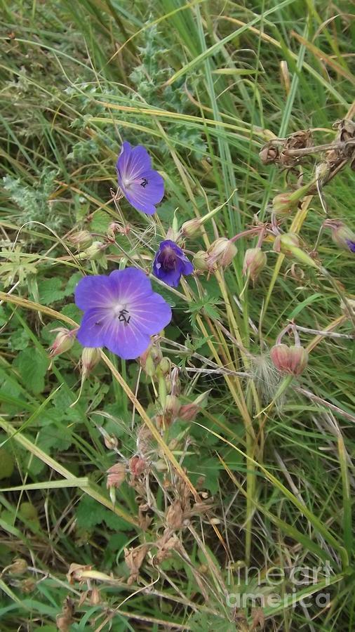 Blue Flowers Photograph - Blue Flowers by John Williams