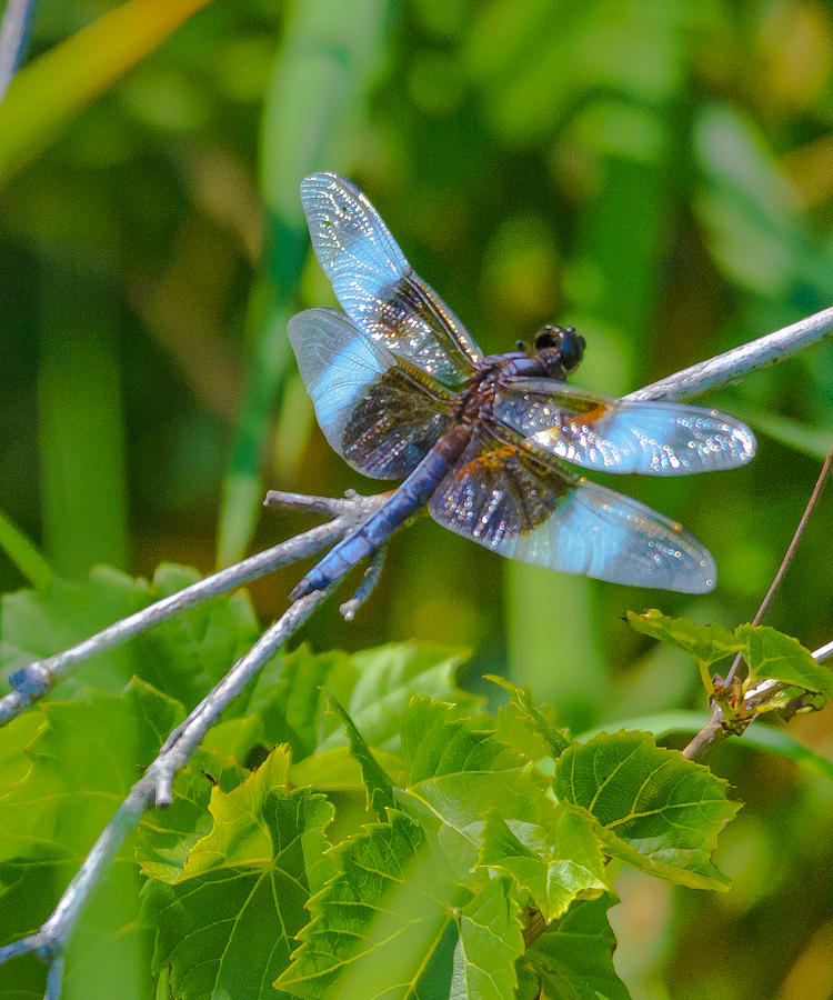 Blue Fly Number Two Photograph