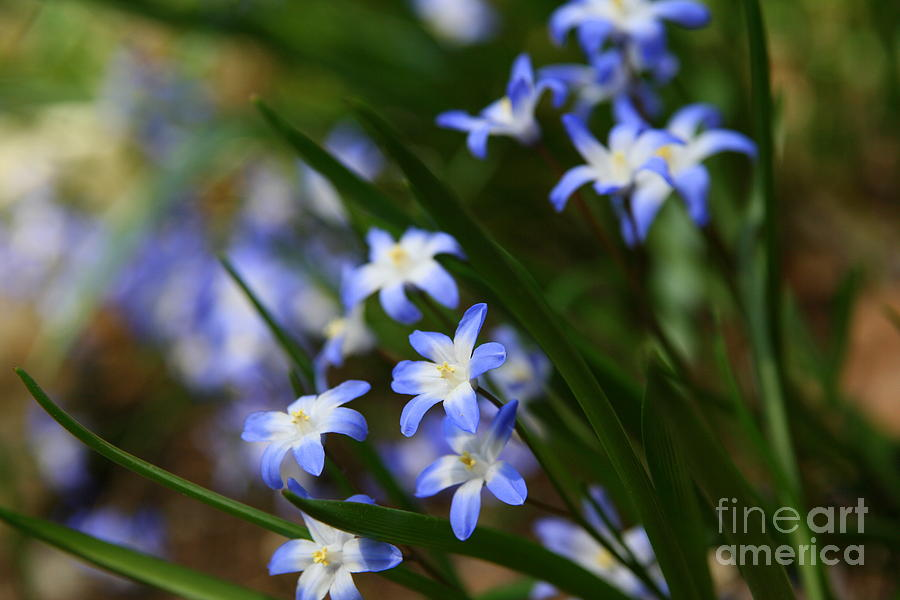 Wildflower Photograph - Blue For You by Neal Eslinger