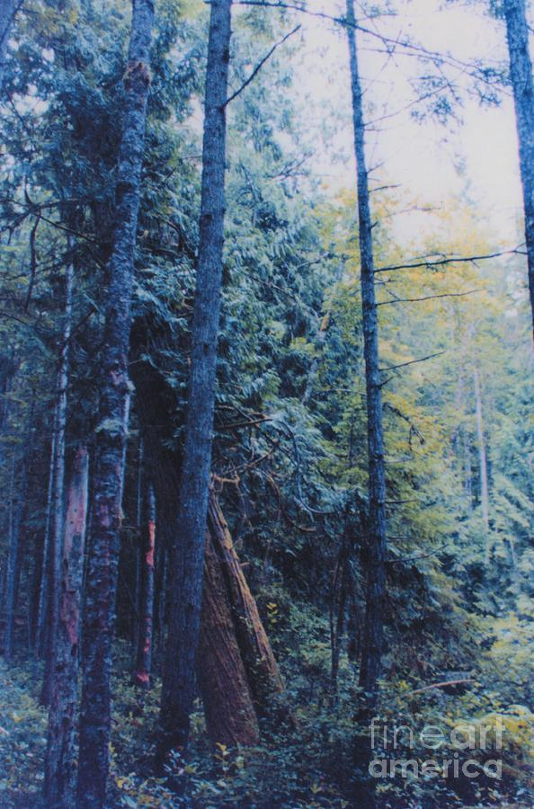 First Star Photograph - Blue Forest By Jrr by First Star Art