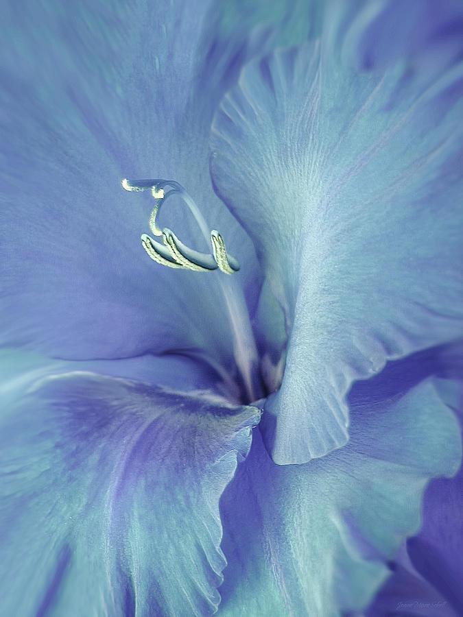 Gladiola Photograph - Blue Gladiolus Flower by Jennie Marie Schell