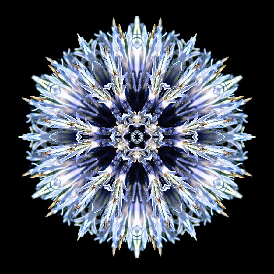 Flower Photograph - Blue Globe Thistle Flower Mandala by David J Bookbinder