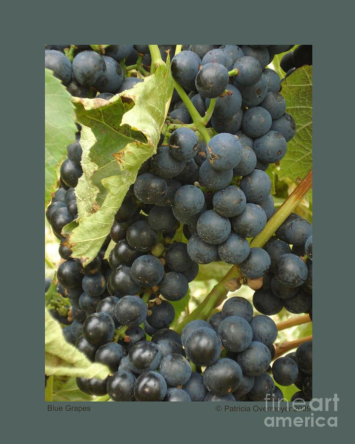 Grape Photograph - Blue Grapes by Patricia Overmoyer