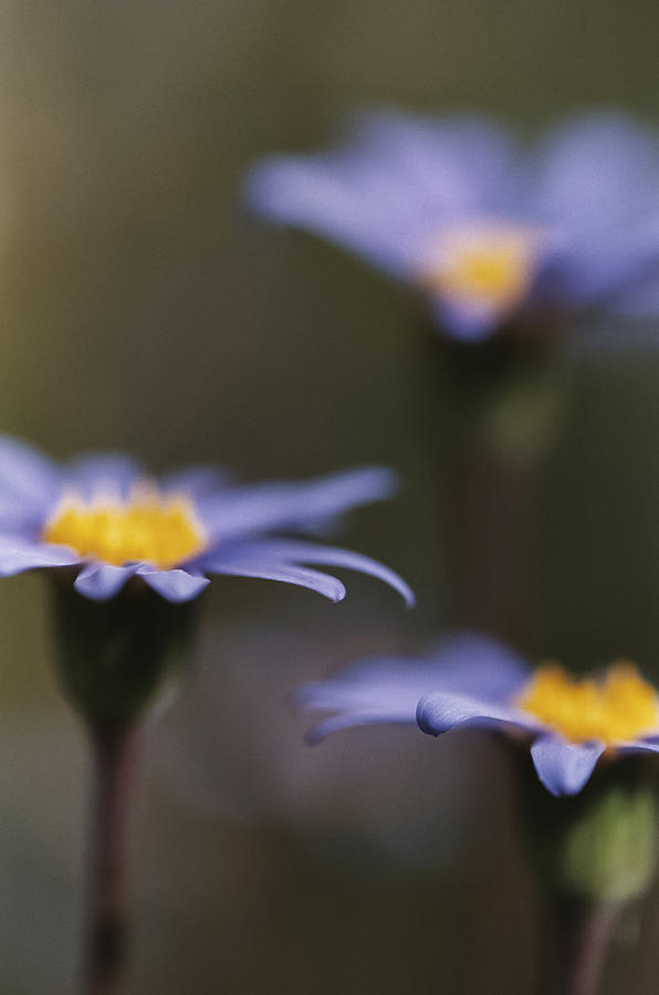 Felicia Photograph - Blue Haze by Caitlyn  Grasso