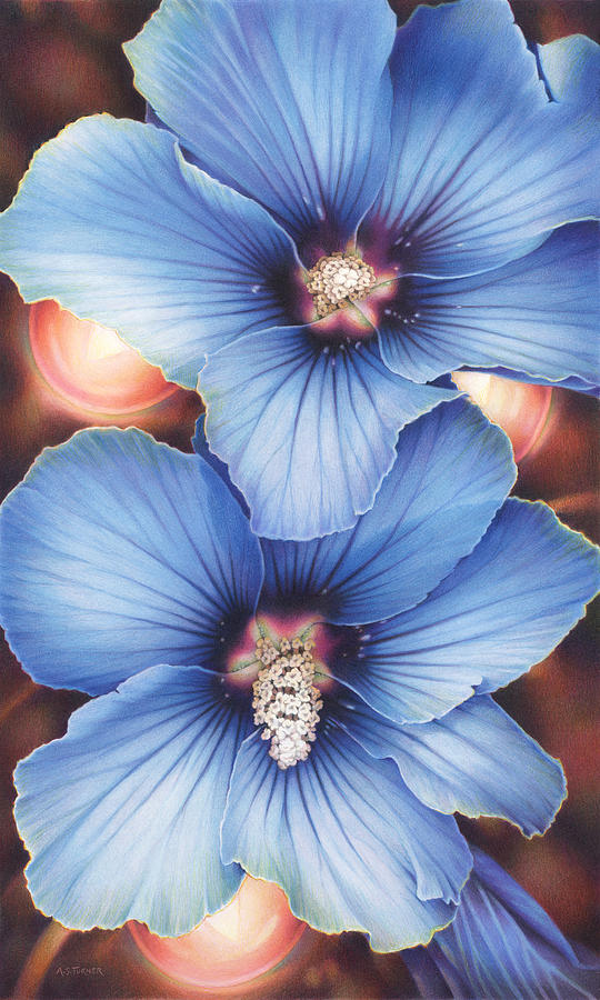Blue Hibiscus With Fairy Lights Drawing By Amy S Turner