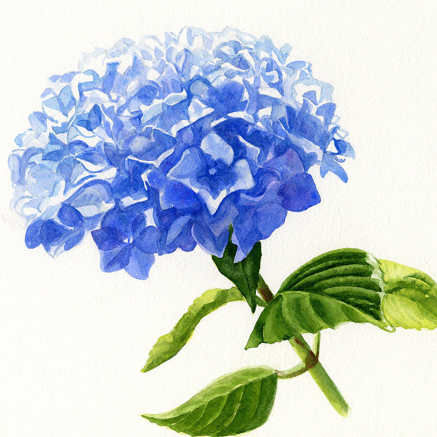 Blue Hydrangea Square Design Painting By Sharon Freeman