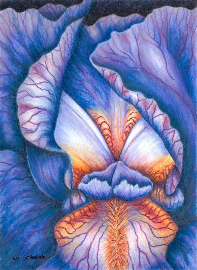 Blue Iris by Lori Sutherland