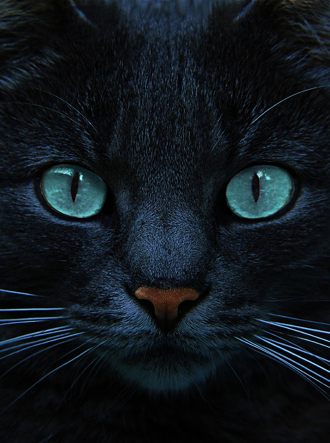 Cat Photograph - Blue Is The Night by Joachim G Pinkawa