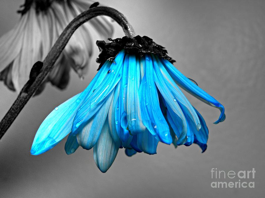 Flower Photograph - Blue by Issaac Rickenberg
