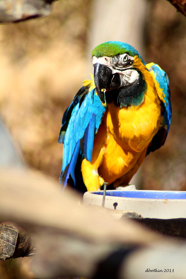 Zoo Photograph - Blue Jacket by Dick Botkin