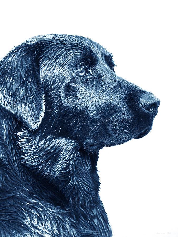 Blue Labrador Retriever Dog Photograph By Jennie Marie Schell