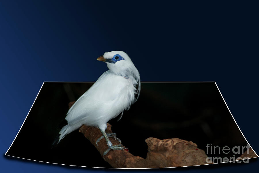 Birds Photograph - Blue Mask Bandit Bird by Thomas Woolworth