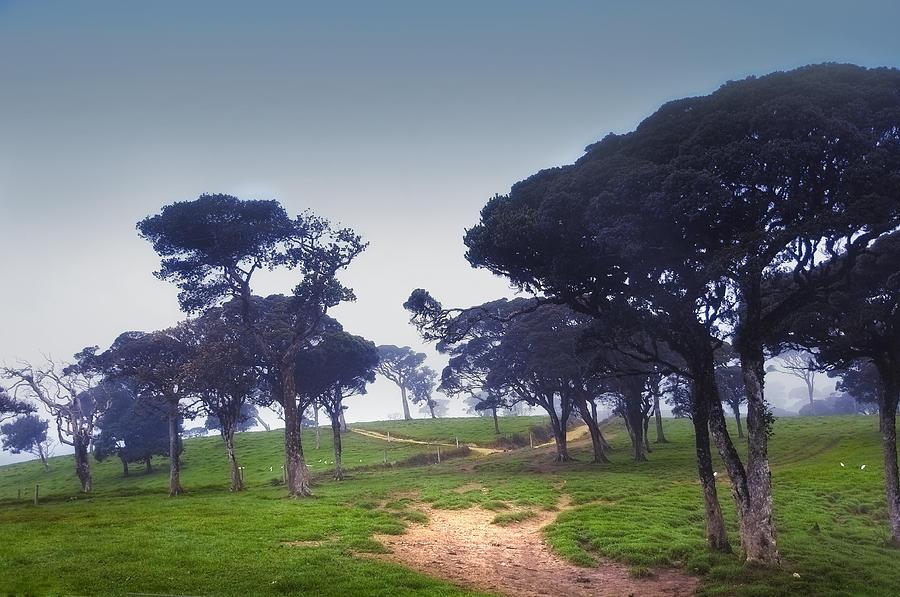 Sri Lanka Photograph - Blue Mist Silence. Sri Lanka by Jenny Rainbow