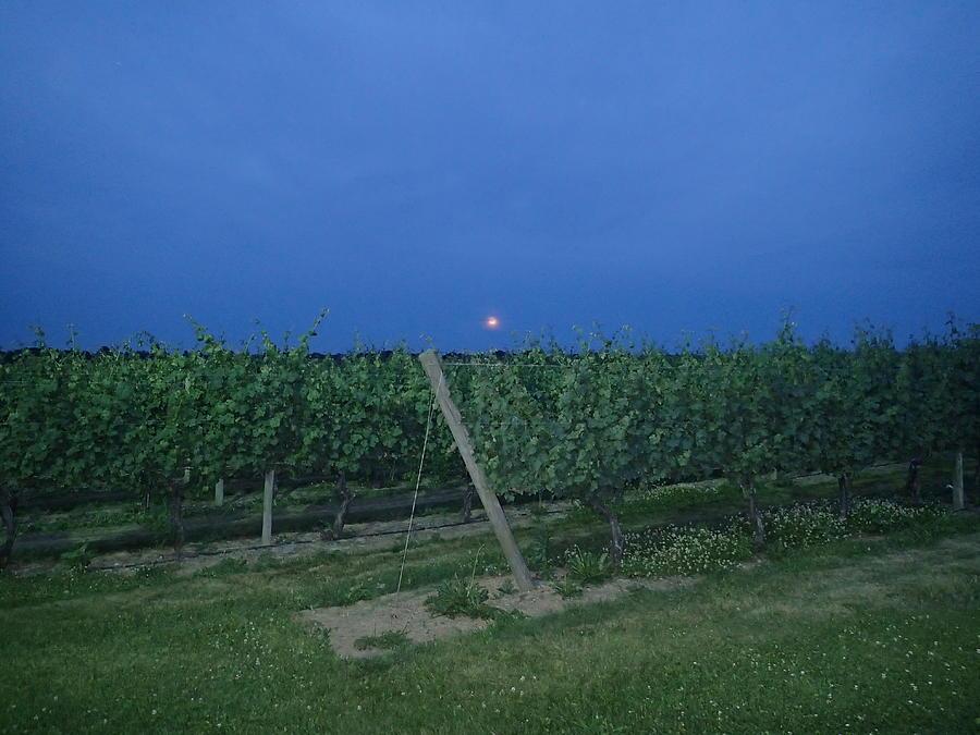 Grape Photograph - Blue Moon by Robert Nickologianis