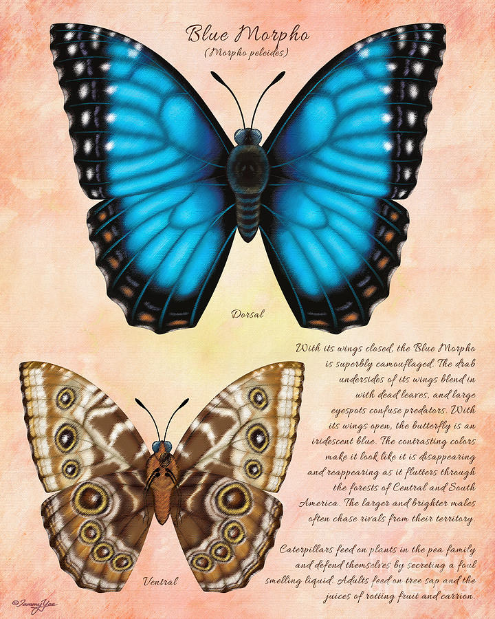 Butterfly Painting - Blue Morpho Butterfly by Tammy Yee