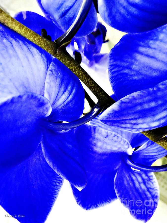 Blue Orchid 2 Photograph