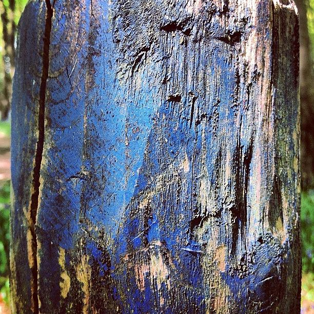 Painted Photograph - Blue Painted Wood #iccloseups #painted by Nic Squirrell