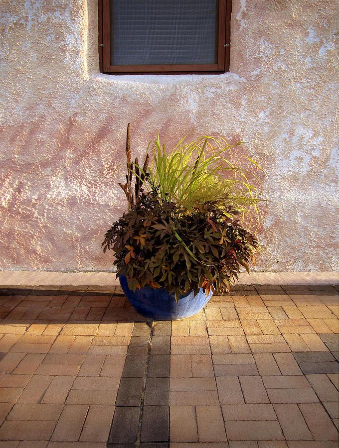 Planter Photograph - Blue Planter Morning Sun by Ann Powell