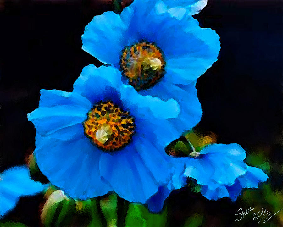Blue poppies painting by shere crossman blue poppy painting blue poppies by shere crossman mightylinksfo