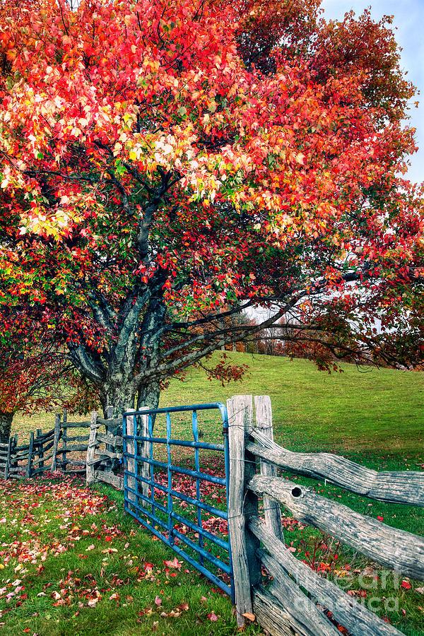 North Carolina Photograph - Blue Ridge - Fall Colors - Autumn Maple Tree Fence Gate I by Dan Carmichael