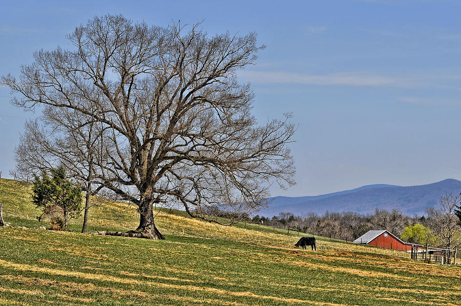 Blue Ridge Mountains Photograph - Blue Ridge Farm by Lara Ellis