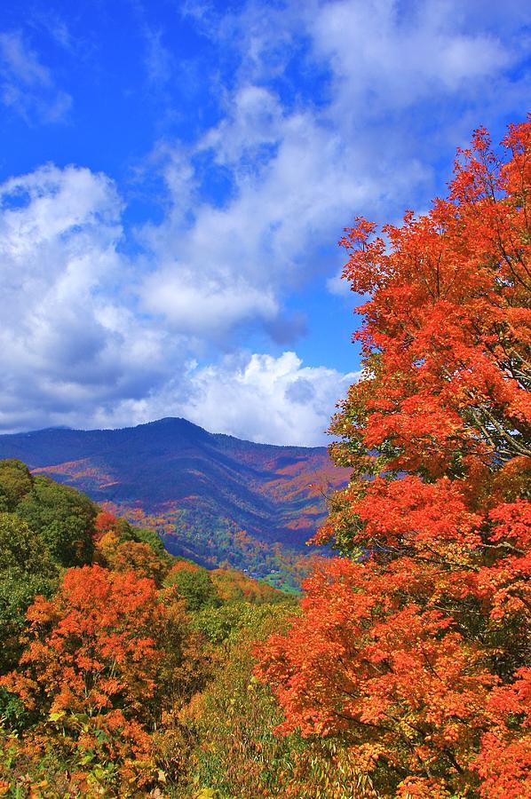Blue Ridge Foliage Photograph