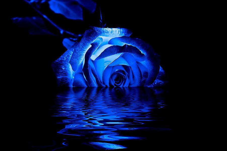Blue Rose Photograph By Doug Long