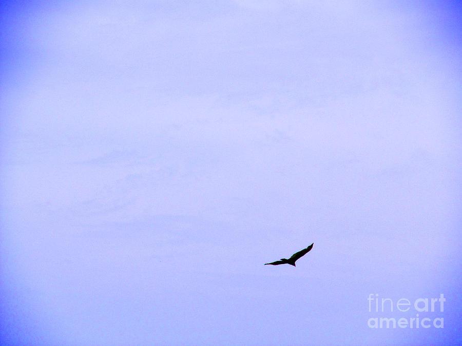 Bird Photograph - Blue Solo Flight by Tina M Wenger