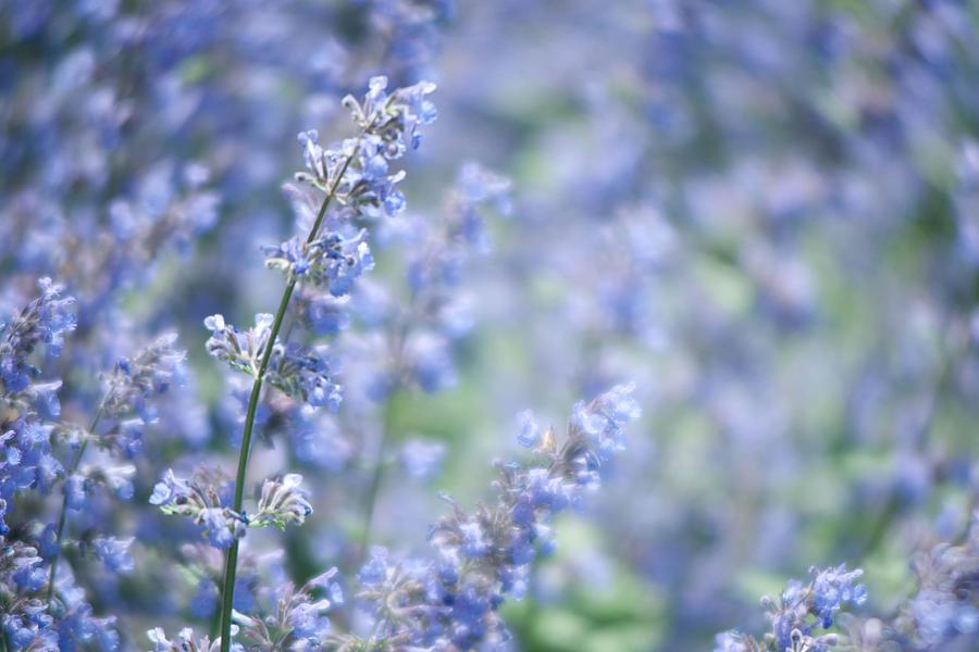 Abstract Photograph - Blue Sonata by Zina Zinchik