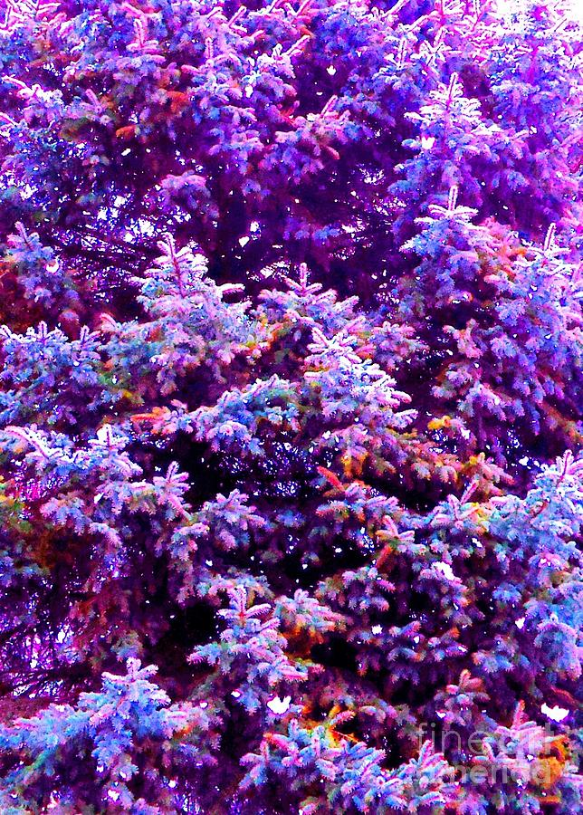 Blue Photograph - Blue Spruce In The Snow by Ann Johndro-Collins