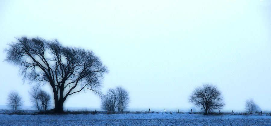 Winter Photograph - Blue Treeline by Kimberleigh Ladd