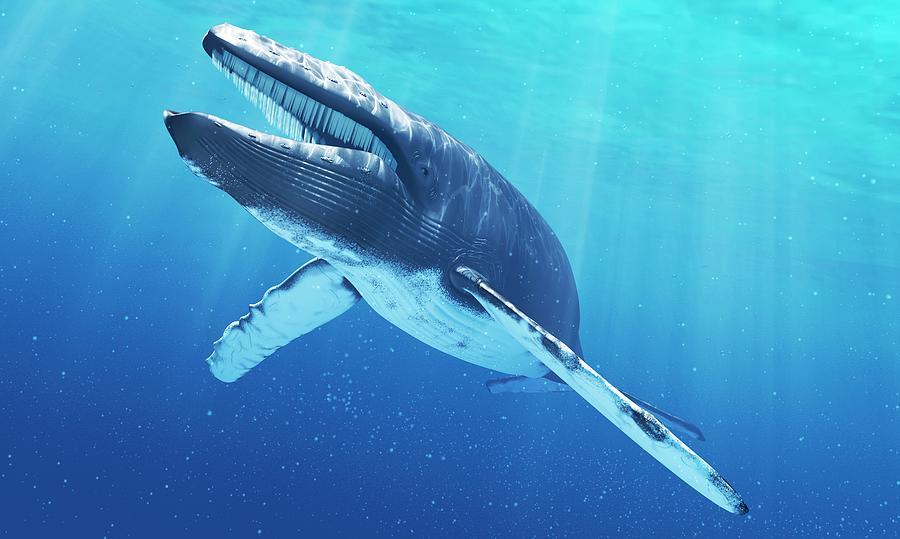 Blue Whale, Artwork Digital Art by Sciepro