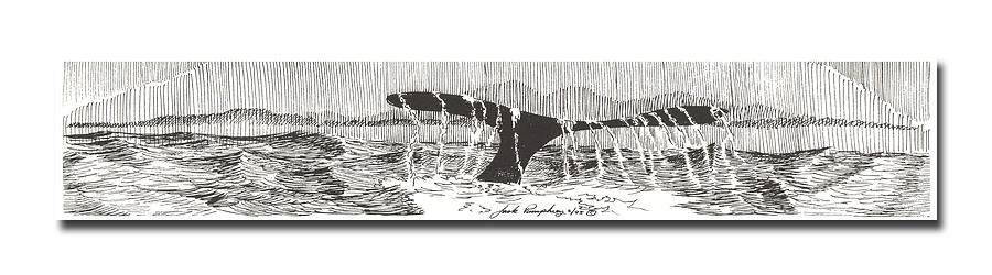 Whales Tail Drawing