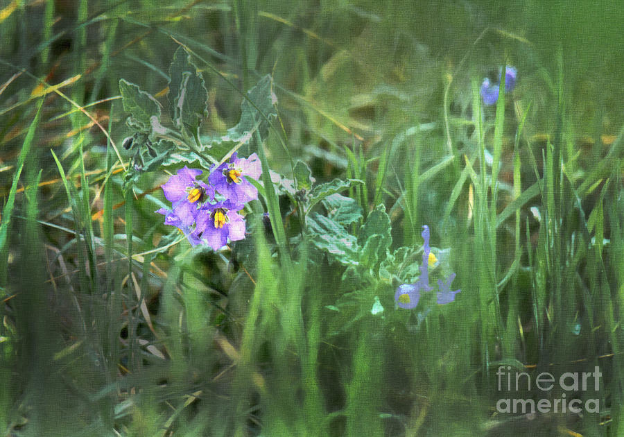 Close Up Photograph - Blue Wildflowers by Frank Bez