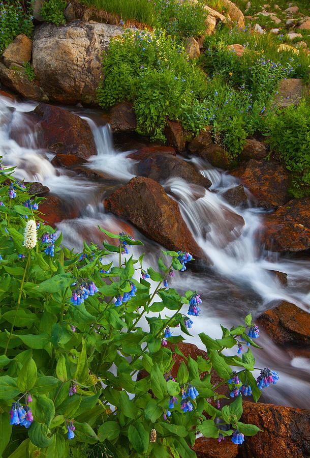 Stream Photograph - Bluebell Creek by Darren  White