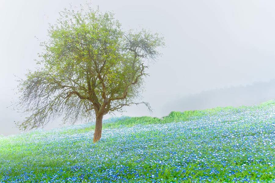 Appalachia Photograph - Bluebells by Debra and Dave Vanderlaan