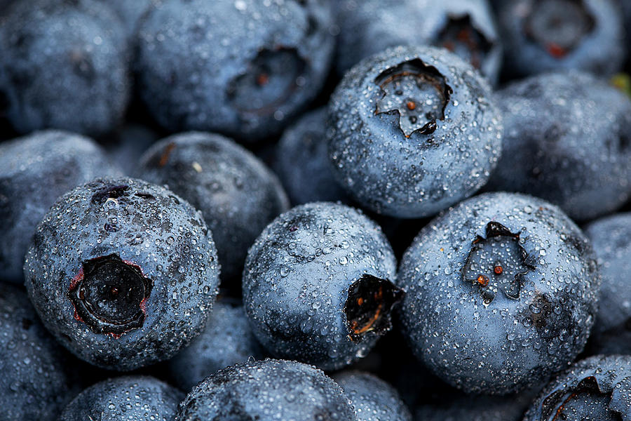 Surrey Photograph - Blueberries Fruits by Kevin Van Der Leek Photography