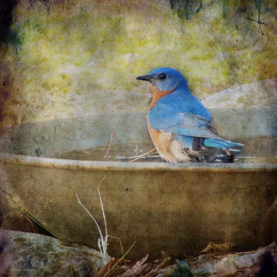 Bird Photograph - Bluebird by Melissa Bittinger