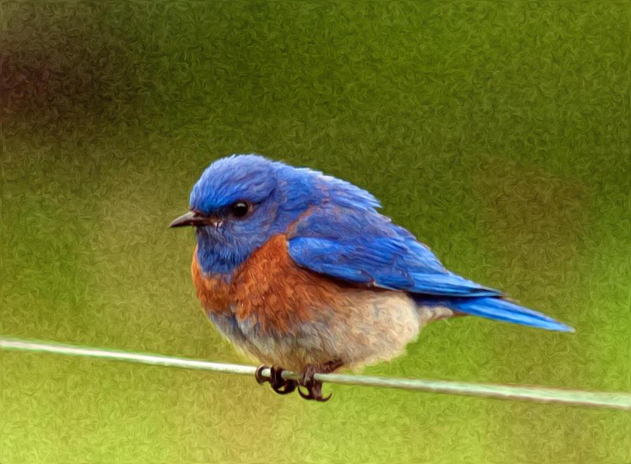 Animals Photograph - Bluebird  Painting by Jean Noren